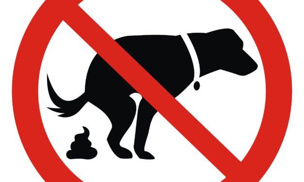 Crotte de chien : amende, que dit la loi et les solutions existantes